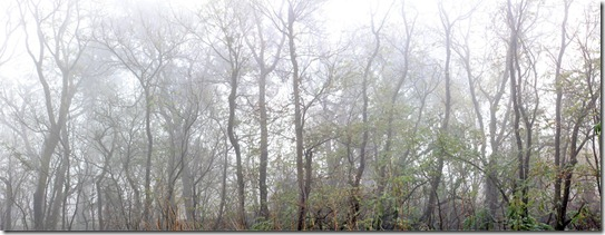 101205_fog_greenbelt_panorama