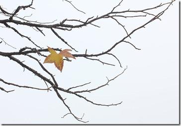 101205_last_leaf