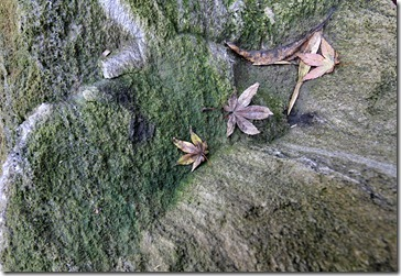 101212_moss-on-pumice-rock