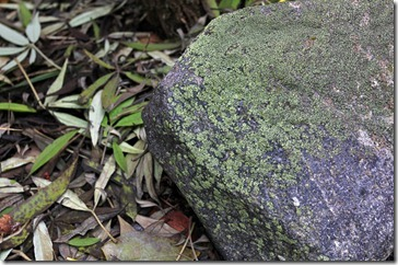 101212_moss-on-rock
