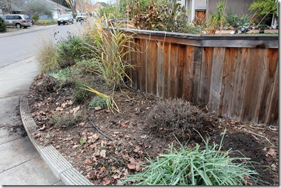 110117_frontyard_trimming_after