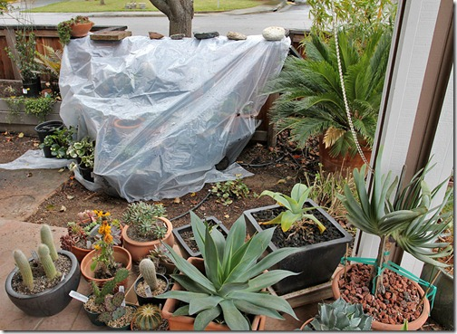 Rain shelter for cacti