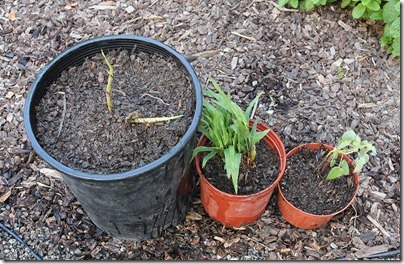 110421_trade_potted