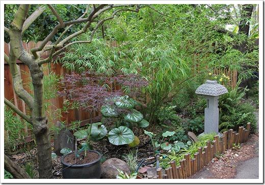 110514_backyard1