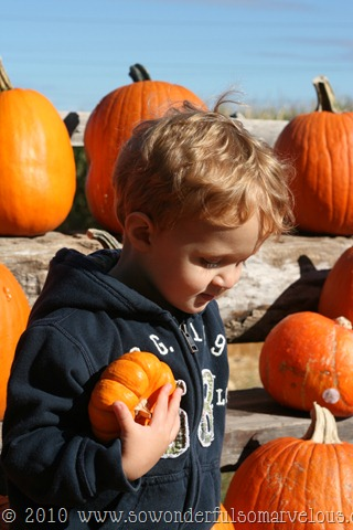 pumpkin patch 092