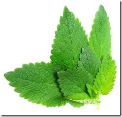 scm-leaf