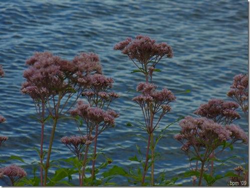 flowersandwaterbee2