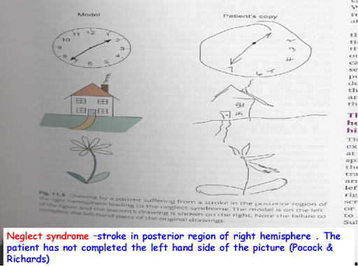 Movements Allowed By Synovial Joints. of movements of one hand