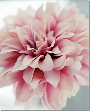 blomster1