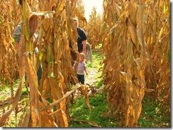 Corn Maz5