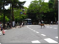09Japan-Nara 119