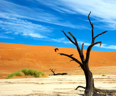 Sossusvlei, Dead trees of the Namib Desert, Namibia