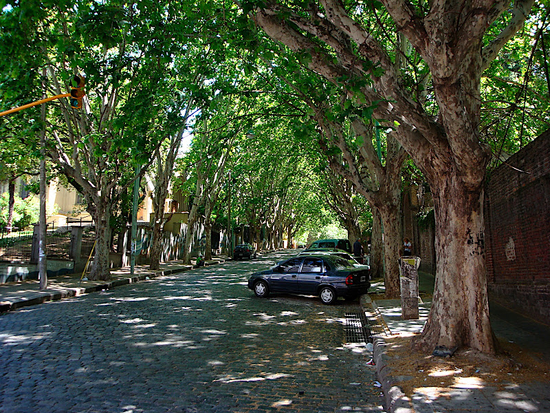 lovely tree lined street