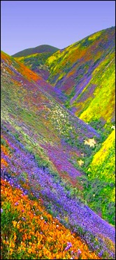 Vally-Of-Flowers-2