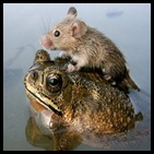 mouse-frog_big India monsoon natl geo
