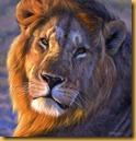 african-lion-final