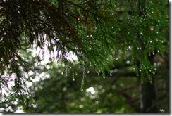 雨の日曜、森に行く1