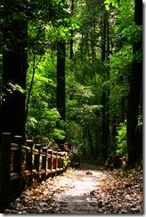 雨の日曜、森に行く15