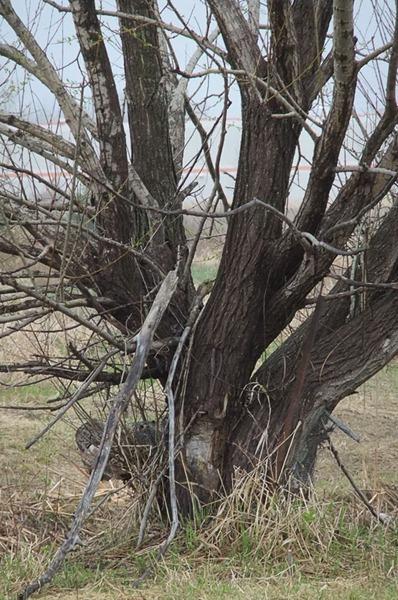 DSCF2165_tree_OOC[1]