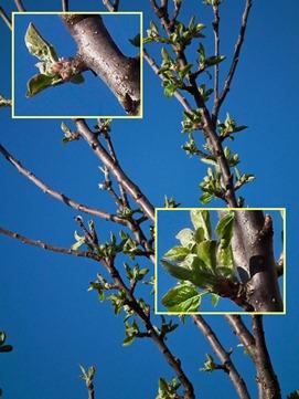 DSCF5288_hs10_tree_rennie_crops[1]