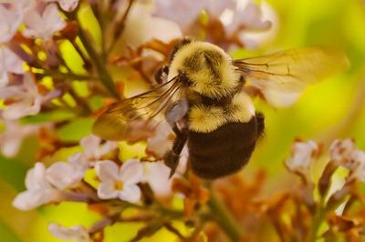 DSC_1694_bee[1]