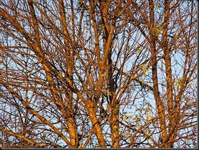 DSCF0522_tree[1]