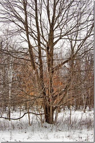DSC_7246_tree