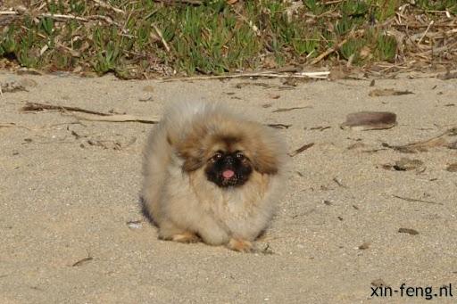 Ari op het strand