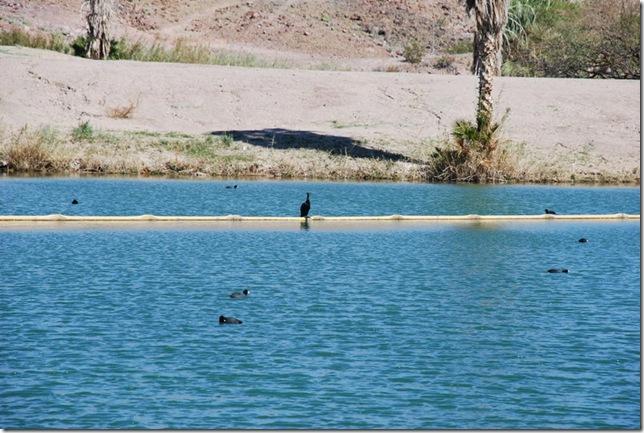 02-23-10 Imperial Dam Area 011
