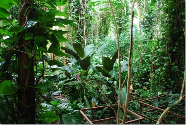 10-25-10 Biosphere 2 069