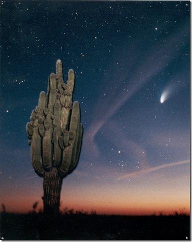 Hale-Bopp Big Saguaro