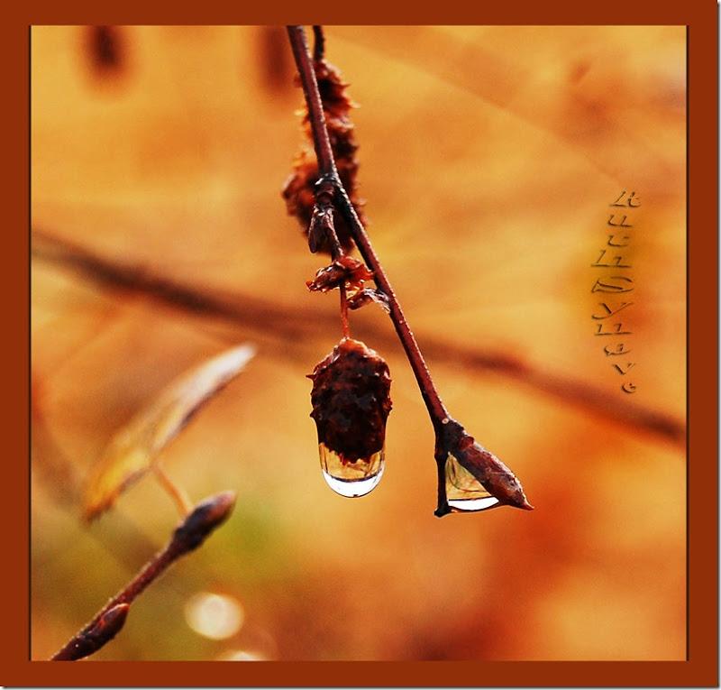 Dråpe i høstregnet