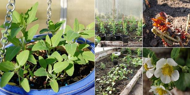 Vis roser,jorbær,sukkererter og reddiker