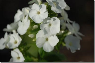 5.15 plant sale 11