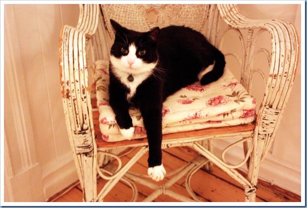 katter6