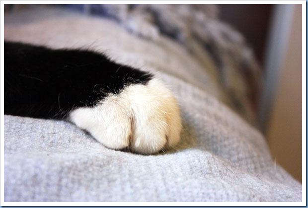 katterna2