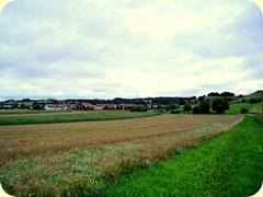 Korn und Gras