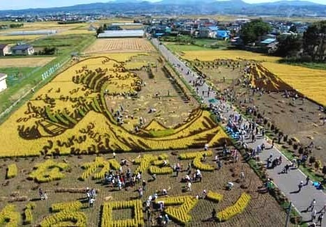 rice_art_harvest