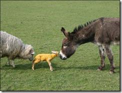 donkey1jpg