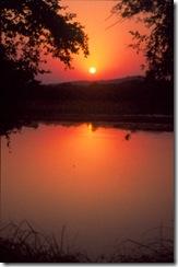 ranthambhor park sunset
