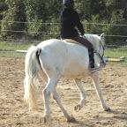 """Elodie (jeune cavalière galop 3). Cavalière au """"mi-temps"""" au haras, débrouillarde et habile, elle monte avec Flavie les poneys arrivés au haras dans le but d'être vendus et parfois des chevaux de propriétaire."""