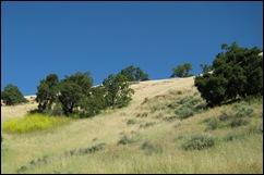 sunol hill