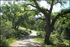 oaktreepath