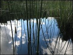 reflectreedskyweb