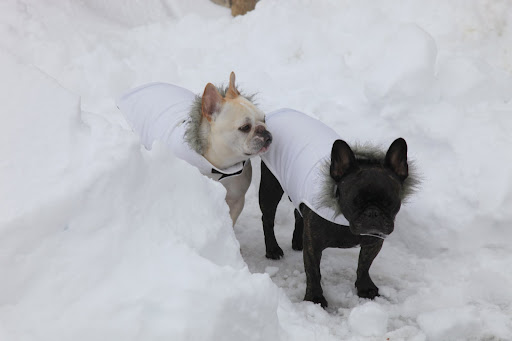 Well, Francesca, we're wearing our new white snow parkas and I think we blend into the background a bit too much.  At least, I do.