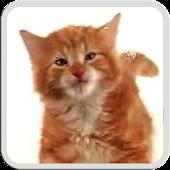Free Download CAT LICKS LIVE WALLPAPER FREE APK for Samsung