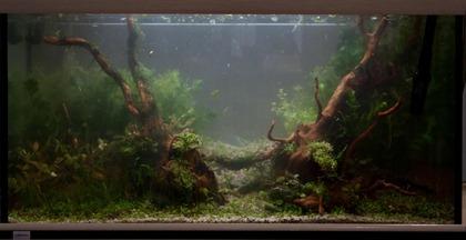 20101118-setup_aqua_nata_boa-35 (Large)