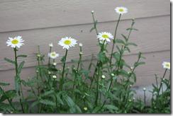 gardening 013