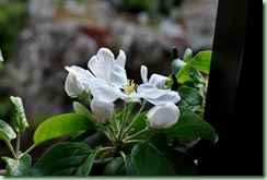 sävstaholm blommar