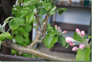 liten gren